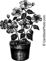 white virág, fekete, rajz
