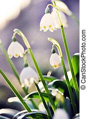 white virág, finom, virágzó