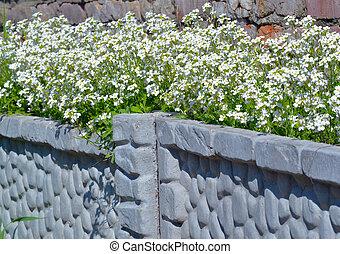 white virág, meglehetősen, virágzó
