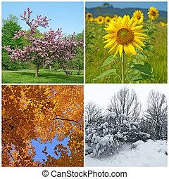 winter., eredet, ősz, négy, seasons., nyár