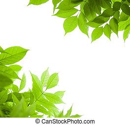wisteria, szög, felett, -, oldal, zöld háttér, levél növényen, fehér, határ, zöld