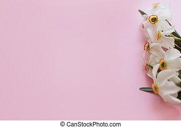 women's, menstruáció, day., határ, rózsaszínű, hely, szöveg, boldog, háttér, elegáns, gyönyörű, nárciszok