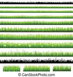 zöld, állhatatos, fű