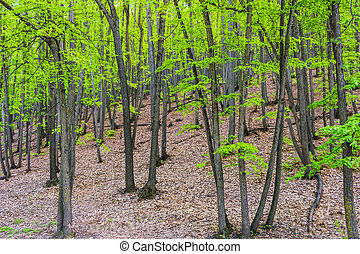 zöld erdő, bitófák