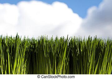 zöld fű, ég