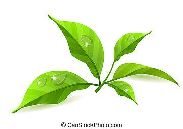 zöld, fehér, zöld, elszigetelt, háttér