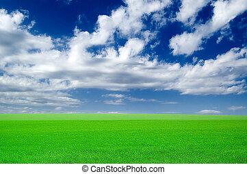 zöld, field.