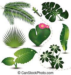 zöld, gyűjtés, tropikus