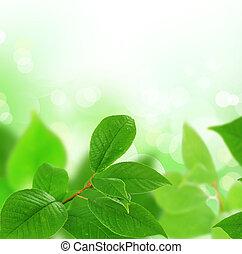 zöld, határ, gyönyörű