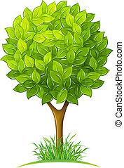 zöld kilépő, fa