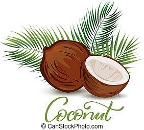 zöld, pálma, kókuszdió, ábra