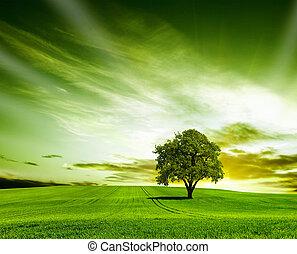 zöld parkosít