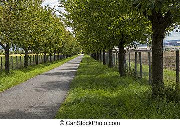 zöld, t, vidéki, vonalazott, lombos, út