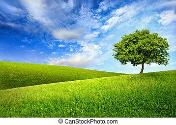 zöld tető, fa, egyedülálló, hegy