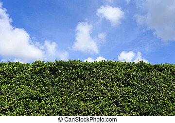 zöld, tiszta égbolt, háttér, fal, zöld