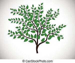 zöld white, levél növényen, elszigetelt, háttér