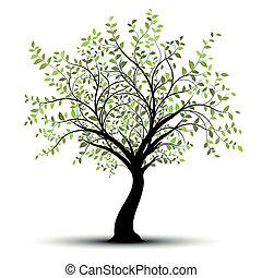 zöld white, vektor, fa, háttér