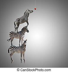 zebra, kazal, alma, eszik, elérő