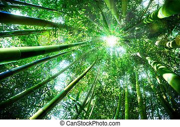 zen, -, bambusz erdő, fogalom