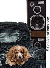 zene, kutya