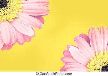 zenemű, óriási sajtkorongok, két, rózsaszínű, sárga háttér