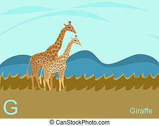 zsiráf, abc, g betű, állat